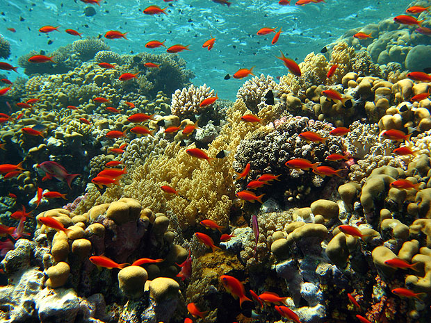 Coral garden with orange fish