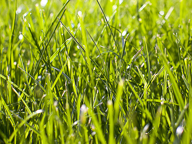 Close up of grass in the sun