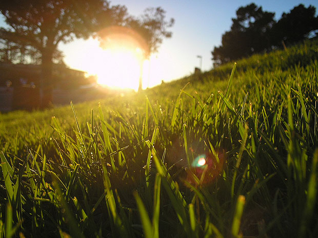 Grass lit by a low sun