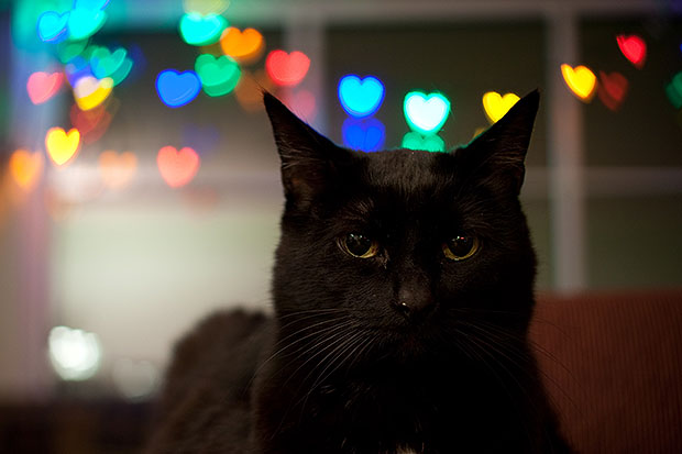 Cat with heart bokeh
