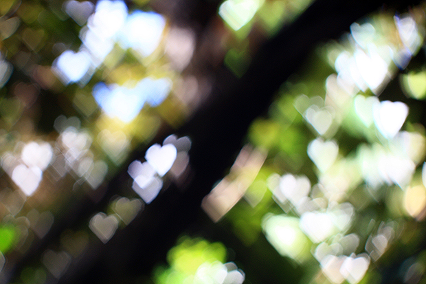 Heart bokeh from daylight through branches