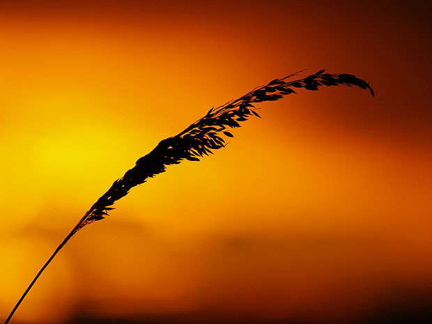 Silhouetted leaf against vivid orange sunset