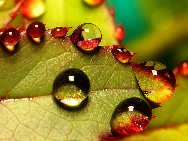 http://www.photographymad.com/files/images/leaf-with-water-drops.jpg