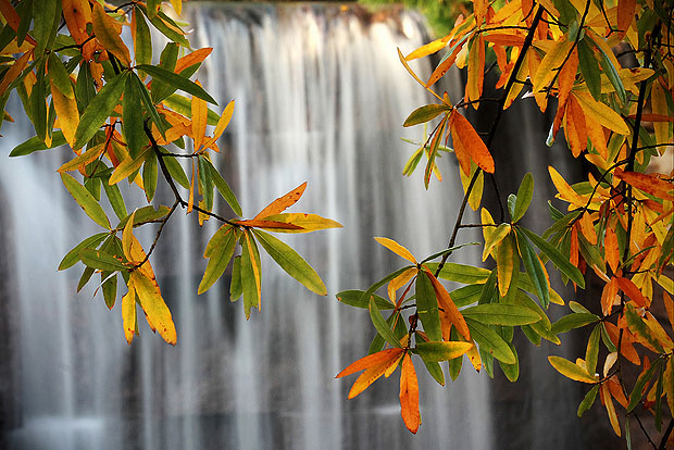 Waterfall through leaves